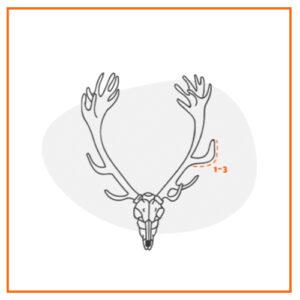 como se mide trofeo ciervo