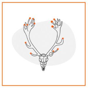 medir trofeo ciervo